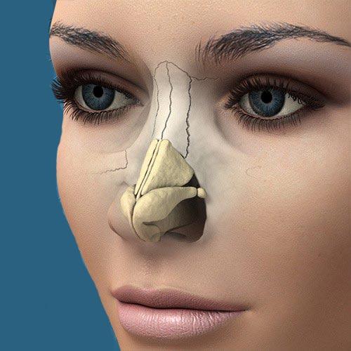anatomibini